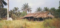 The Pioneer palm oil mill at Ete